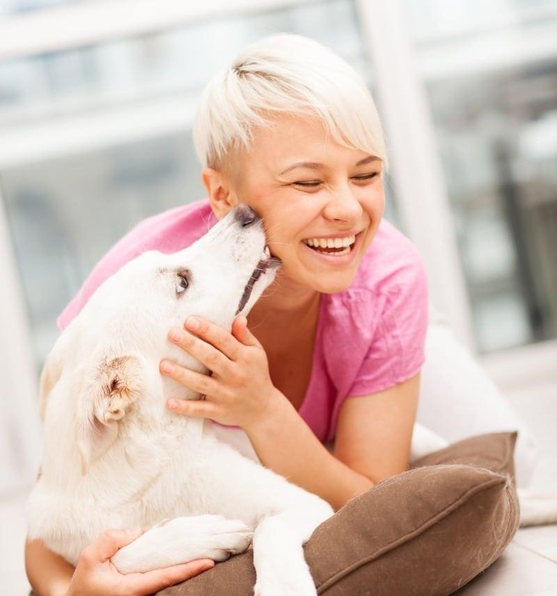 Как собаки говорят нам «спасибо»