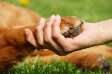 Купание собаки с мылом: чем опасна «банная процедура»