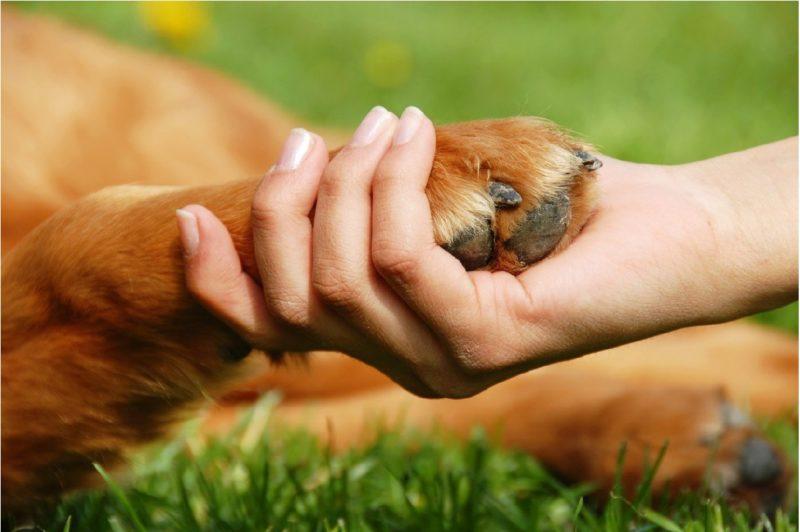 Могут ли собаки определять характер человека