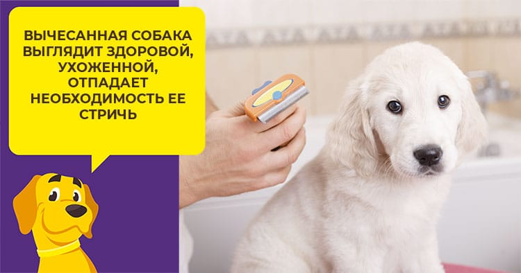 Как подобрать лучшие витамины взрослой собаке или щенку