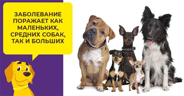 Фронтлайн Комбо - препарат от блох, клещей и власоедов у собак
