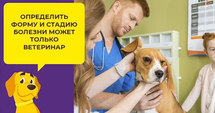 Как определить и вылечить демодекоз у взрослых собак и щенков