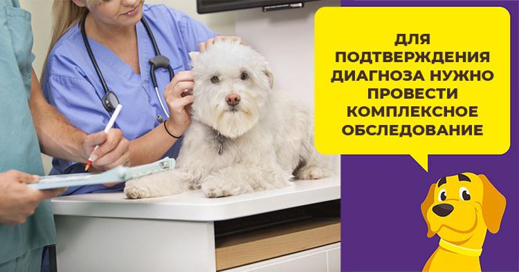 Почему питомец теряет шерсть: распространенные причины и лечение алопеции у собак