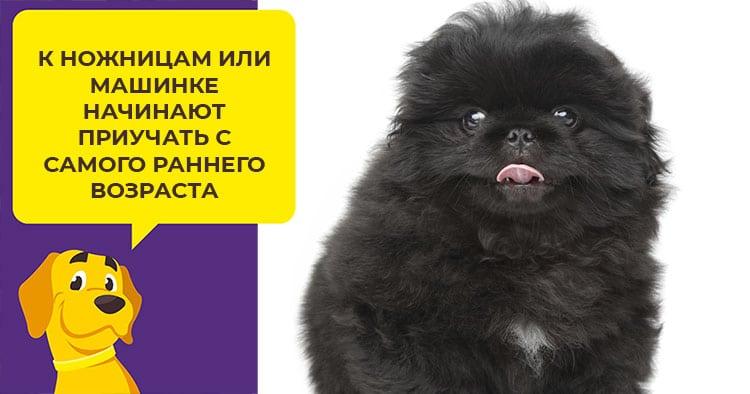 Лечение парвовирусного энтерита у щенков и взрослых собак