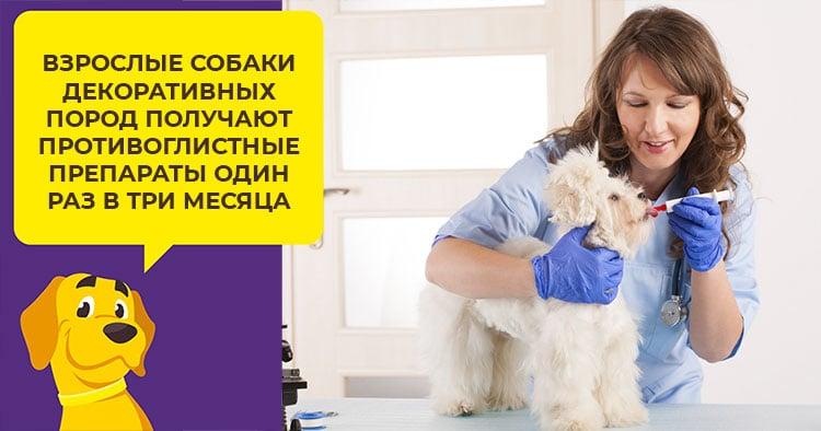 Как проводится дегельминтизация щенков и взрослых собак