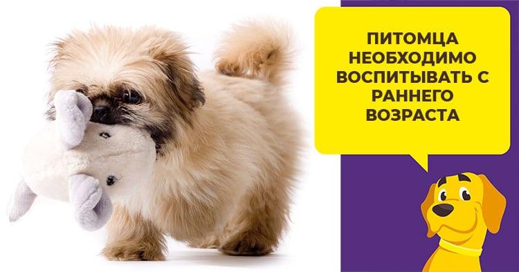 Как правильно давать собаке препарат Празицид