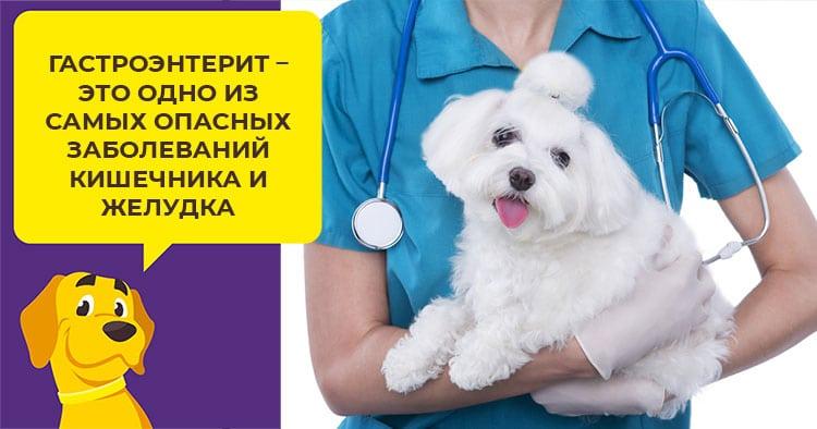 Как правильно стричь когти взрослой собаке и щенку
