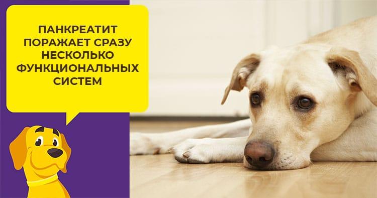 Симптомы и лечение панкреатита у собак