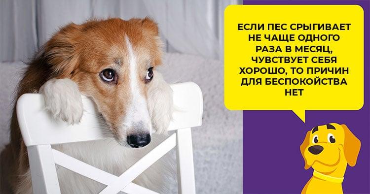 Стоит ли кормить собаку вареной или сырой свеклой