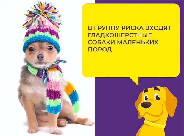 Цистит у собаки лечение в домашних условиях