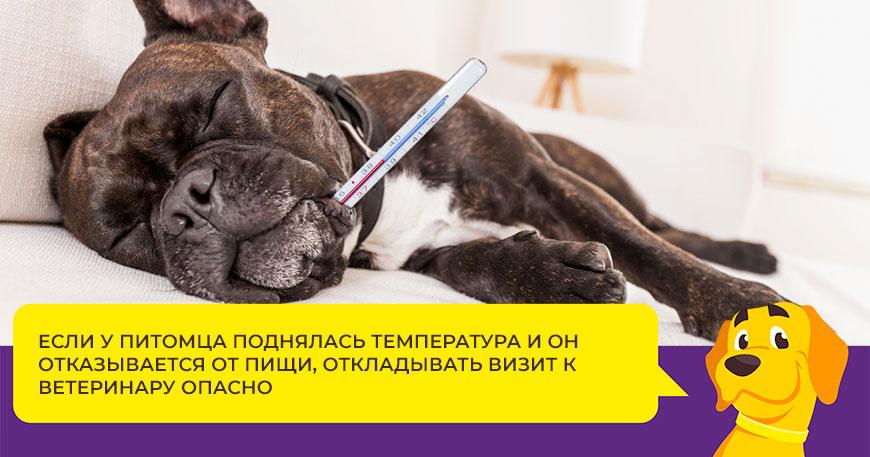 Чем лечить цистит у собаки и как не допустить его повторного появления