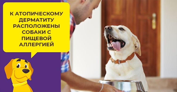 Как рассчитать количество сухого корма для щенка и взрослой собаки