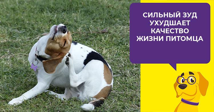 Симптомы и лечение различных видов стафилококковых болезней у собак