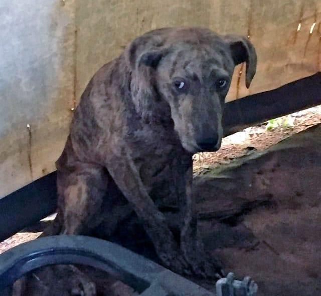 Странное существо на заднем дворе оказалось собакой, которая отчаянно нуждалась в помощи