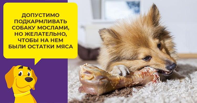 Что делать, если вы заметили у собаки понос с кровью