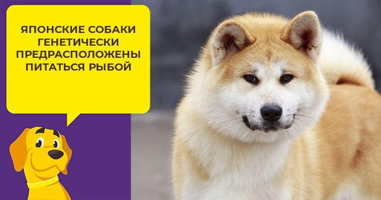 Можно ли кормить собаку перловкой: почему крупа считается вредной для здоровья питомцев