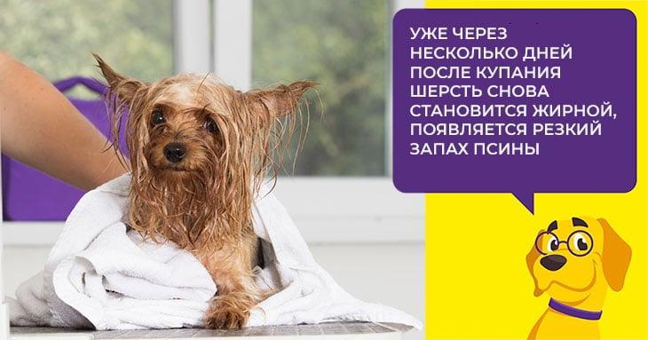 Как лечить себорею у взрослых собак и щенков
