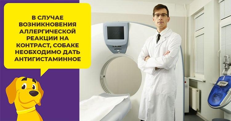Как проводится компьютерная томография организма собаки