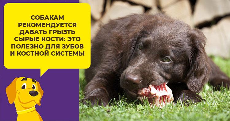 Можно ли собаке куриные кости и субпродукты: головы, лапы, желудки