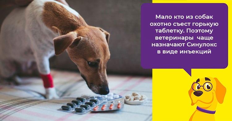 Когда собаке прописывают Синулокс и как правильно применять этот антибиотик