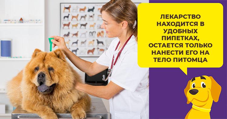 Как обработать собаку каплями «Барс»