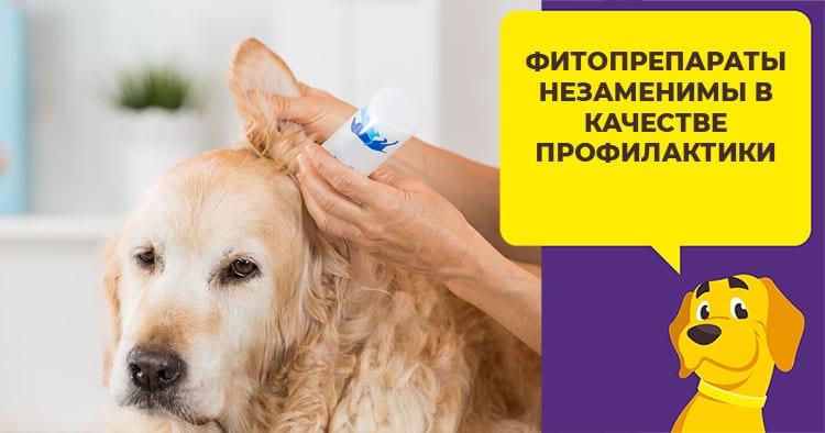 Какие капли выбрать для лечения ушей у собаки
