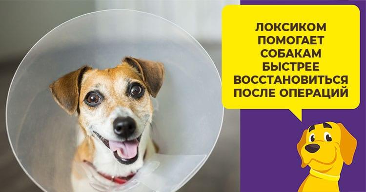 Локсиком - нестероидное обезболивающее средство для собак