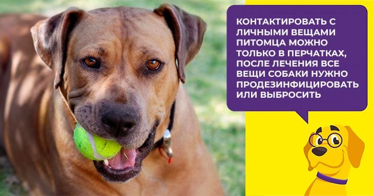 Противогельминтное средство для собак Дирофен: инструкция и отзывы