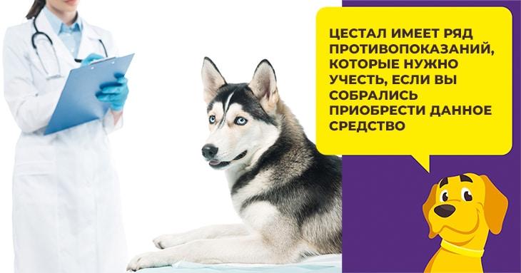 В каких случаях собаке необходимо принимать глистогонный препарат Цистал