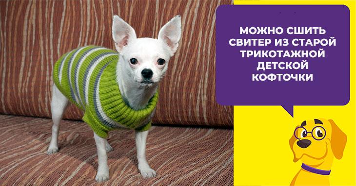 Как выбирать или шить одежду для собаки породы чихуахуа