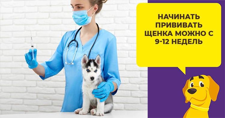 Вакцина Астерион: стоит ли прививать собаку