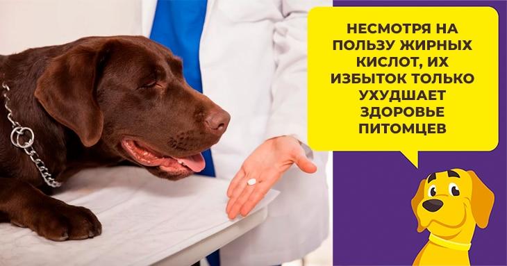 Жирные кислоты омега-3 и омега-6 в рационе собак