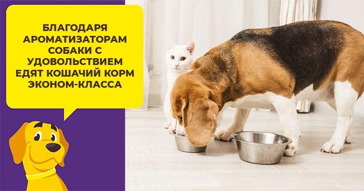 Почему собакам нельзя есть кошачий корм