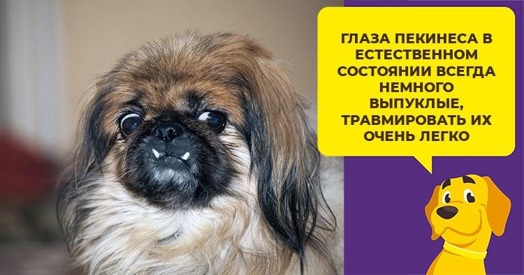 Purina Dog Chow - корм для собак, который подходит всем