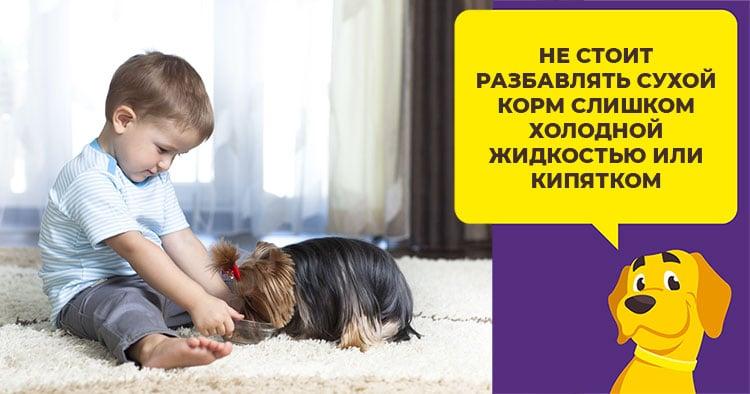 Как проводится процедура чистки зубов у собак ультразвуком