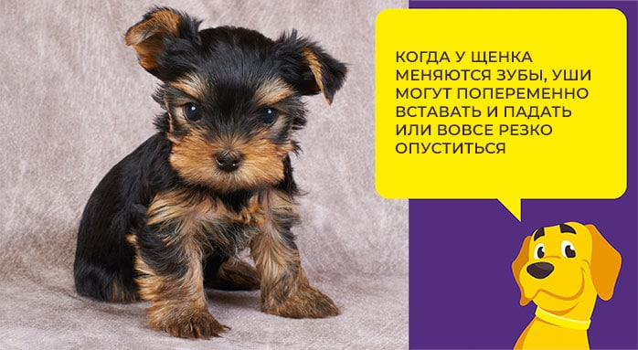 Как ухаживать за собакой после стерилизации или кастрации