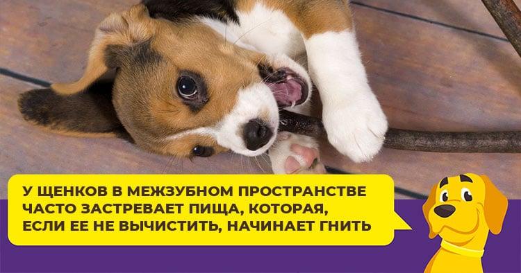 Неприятный запах из пасти у собаки или щенка