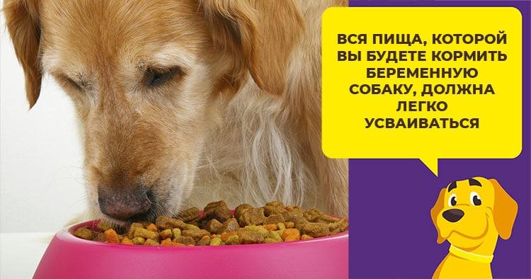 Стоит ли давать собаке препарат Бравекто: взвесим все {amp}quot;за{amp}quot; и {amp}quot;против{amp}quot;