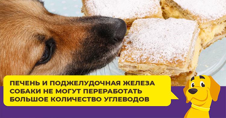 Почему собаки любят рыть ямы и как отучить питомца от этой привычки