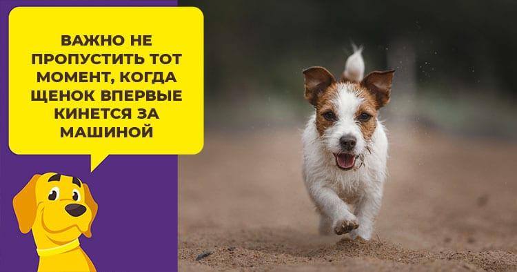 Что делать, если собака боится прогулок