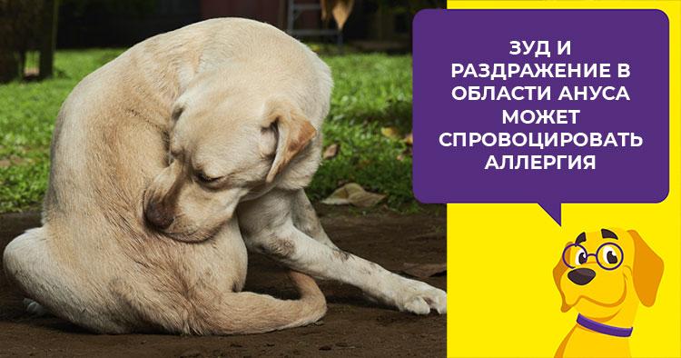 Почему собака гоняется за своим хвостом