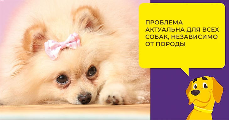 Что делать, если у собаки ложная беременность: советы ветеринара