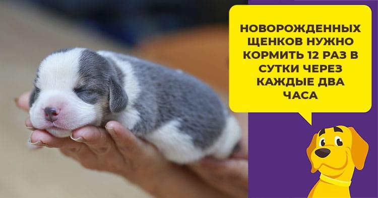 Рацион питания щенка