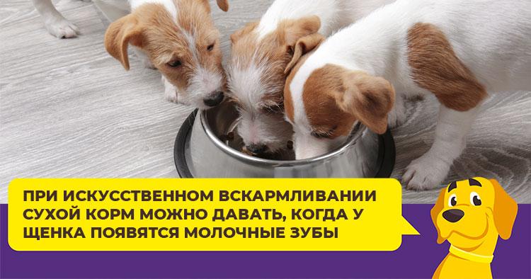 Как правильно кормить щенка: рацион с рождения до года
