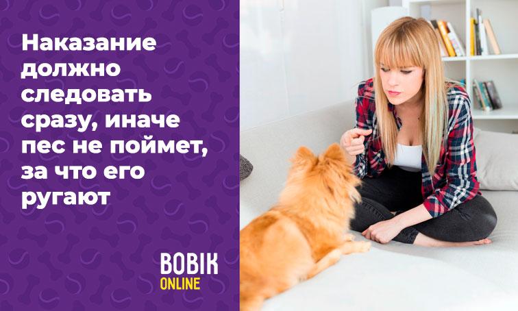 Как отучить грызть обои щенка или взрослую собаку