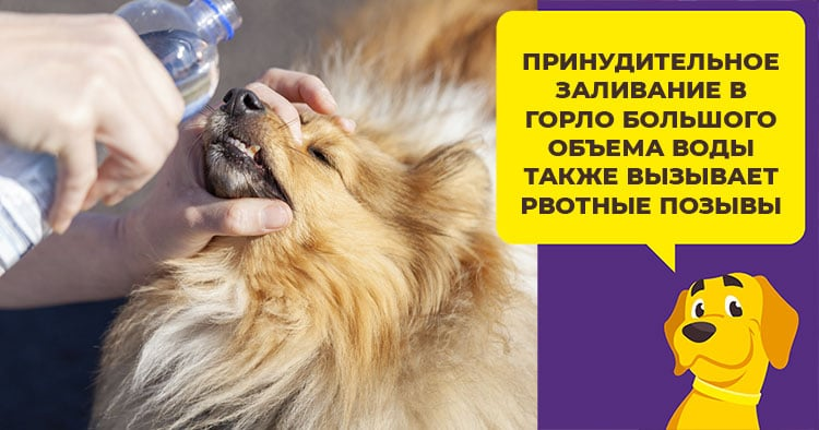 Самые эффективные способы вызвать рвоту у щенка и взрослой собаки