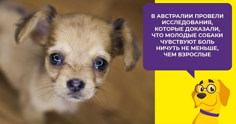 Как предотвратить и снять воспаление параанальных желез у собак