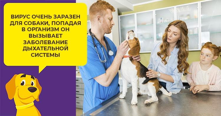 Симптомы и лечение аденовирусной инфекции у собак (в том числе щенков)