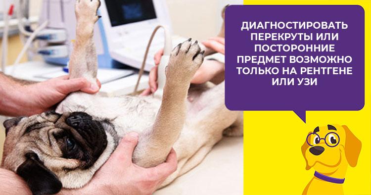 Что делать, если у собаки запор, и нужно ли обращаться в клинику