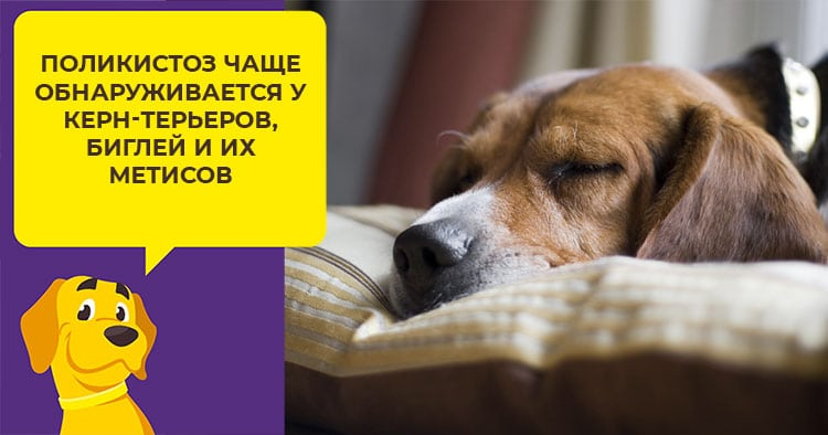 Почечная недостаточность у собак - Симптомы и лечение